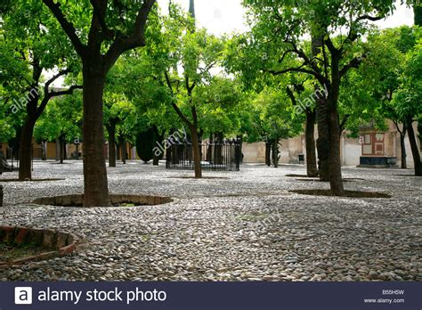 Patio Orange Tree by Patio De Los Naranjos Orange Tree Courtyard Inside The