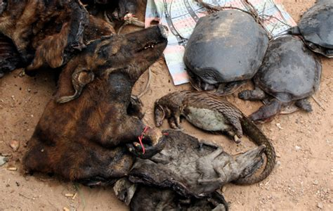 PALF's dogs sniff out illegal bushmeat - Africa Geographic