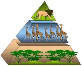 cadena alimenticia jirafa los de abajo a la izquierda en el fondo todos somos