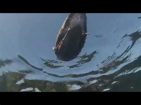 jaws song in boat jaws pov youtube
