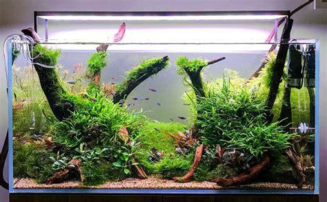 inspirasi aquascape dekorasi cantik aquarium