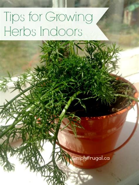 Growing Herbs Inside Tips For Growing Herbs Indoors