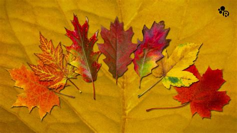 leaves change color why do leaves change color in the fall