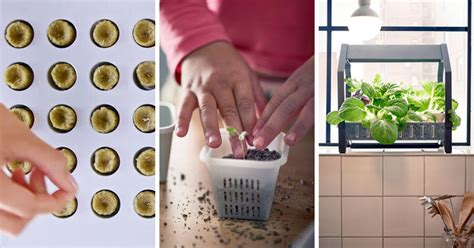 ikea  introducing   indoor gardening series