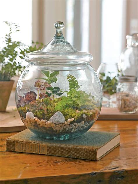 terrarium supplies terrarium kits and diy terrarium on pinterest