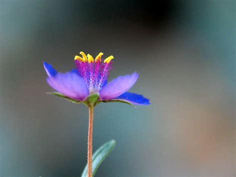 imagenes de rosas unicas en el mundo las flores mas bellas del mundo ecolog 237 a taringa