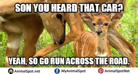 deer meme deer memes