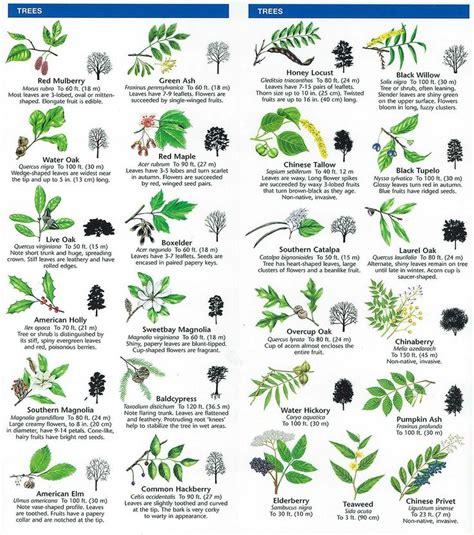 leaf pattern identification species identification woodlands conservancy preschool