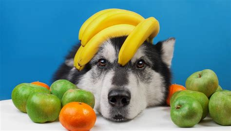 can dogs eat plums 6 best fruits dogs can eat and likely must according to science