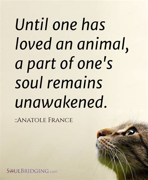 1 1 Animal Quotes Beruang 65 best anatole quotes sayings and quotations quotlr