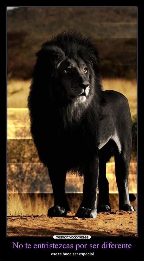 imagenes de leones a blanco y negro pin wallpaper leon negro on pinterest
