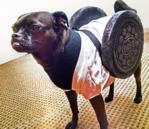 can dogs eat oreos howl o ween 10 costume ideas for beginners to