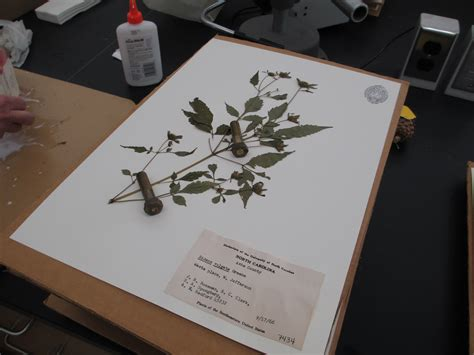 how to crate an at how to make a herbarium file www pixshark images galleries with a bite