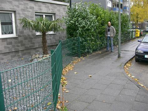 Kirschlorbeer Als Hecke 250 by Prunus Kirschlorbeer Fragen Bilder Pflanz Und