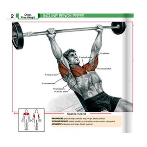 does bench press work biceps gym equipment guide for beginners names and pictures