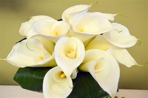Wedding Bouquet Calla Lilies by Calla Wedding Bouquets Utica Ny