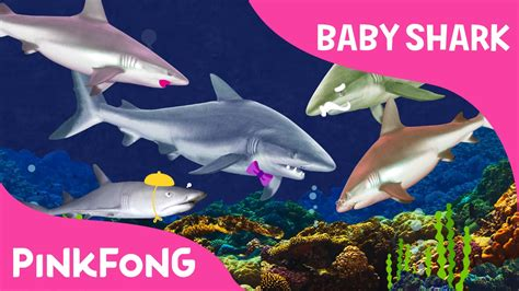 baby shark song chords i m a real baby shark animal songs pinkfong songs