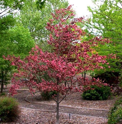 tri color beech weaver s landscape company