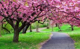 Blossom Garden japanese cherry blossom garden wallpaper http