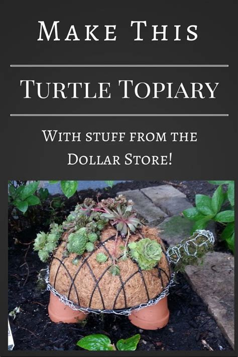 succulent turtle topiary topiary garden