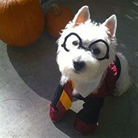 1000+ images about pets dressed like potter on pinterest