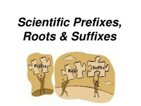 ppt greek and latin prefixes, suffixes, and roots