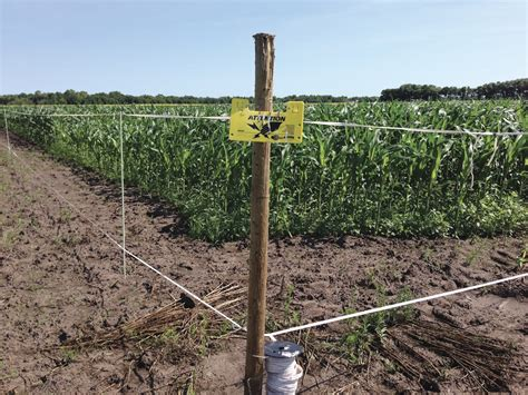Garden Electric Fence Electric Fences Could Be An Easier Way To Keep Deer Out Of