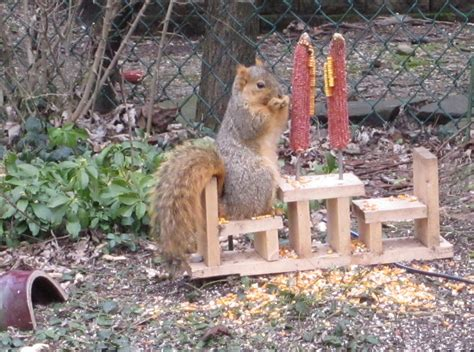 squirrel feeder how creative pinterest