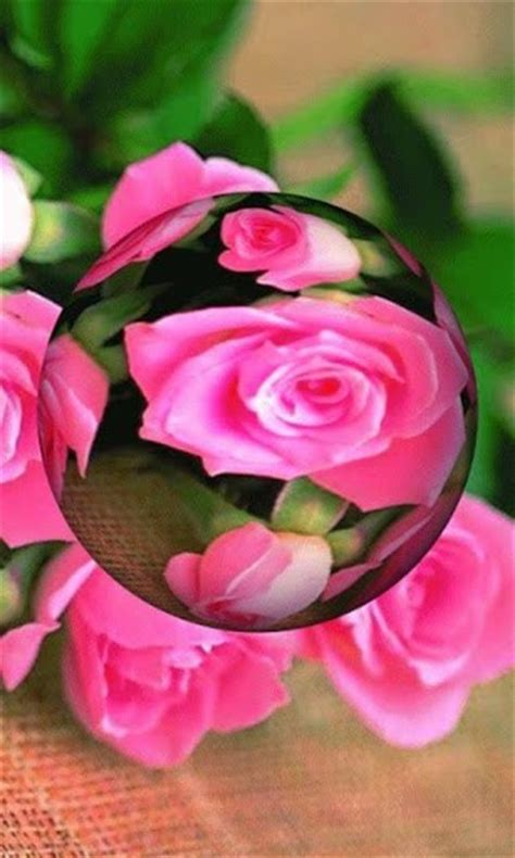 rose themes live 3d rose live wallpaper app for android by beverlyscottok