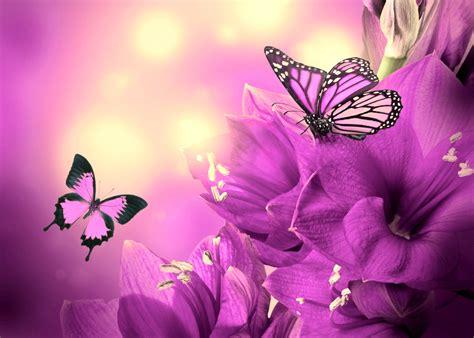 blumen und schmetterlinge 4003 fotos schmetterlinge violett blumen 5600x4003