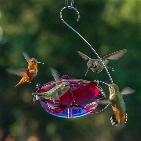 ruby sipper hanging hummingbird feeder in lavender ruby