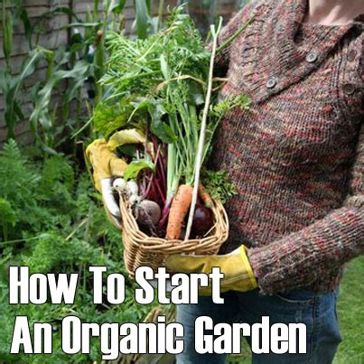 how to start an organic vegetable garden in your backyard how to start an organic garden off grid