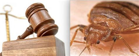 bed bug attorney woman who found bed bug in mgm hotel room hires attorney