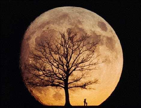 poem: moonrisespun stories, home of cynthia sally haggard