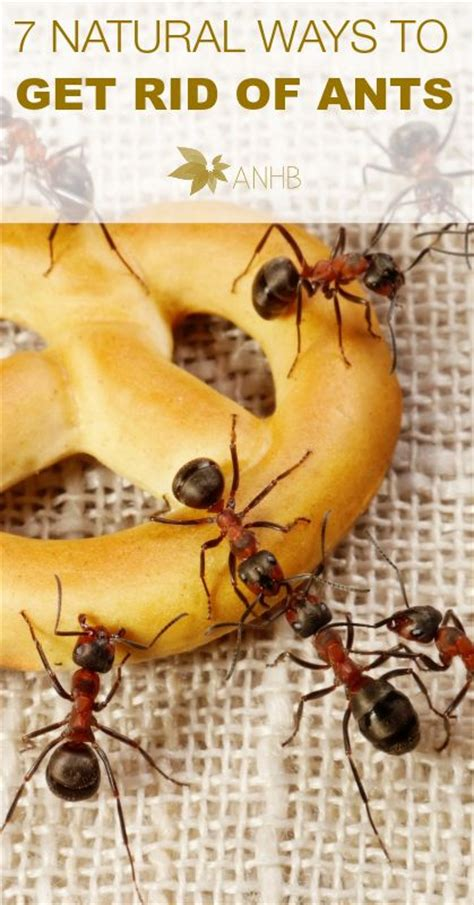 Get Rid Of Ants In Room by 122 Best Images About Home Miscellaneous On