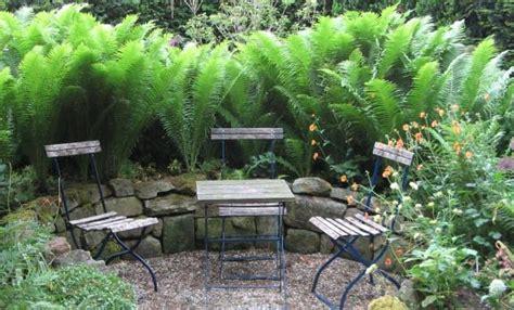 Farn Im Garten by Farne Dryopteris Filix Fl 246 Hkraut Gl 252 Ckshand
