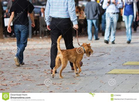 city dogs walking a in the city stock photography image 27268362