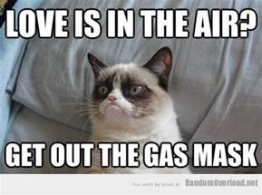 I Love You Meme Funny - grumpy cat my version of the hang over part ii