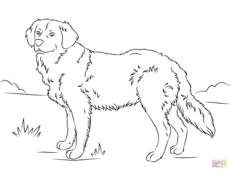 golden retriever puppy coloring pages coloriage golden retriever coloriages 224 imprimer gratuits