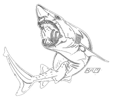 megalidon shark colouring pages