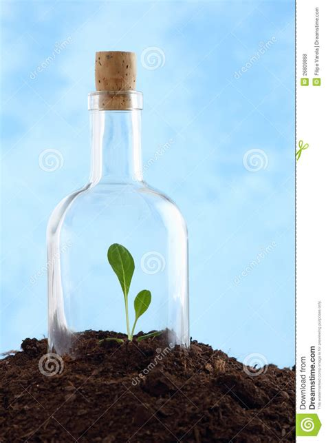 small plant  soil  glass bottle royalty  stock