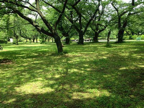 koishikawa botanical garden koishikawa botanical gardens tokyo from the inside