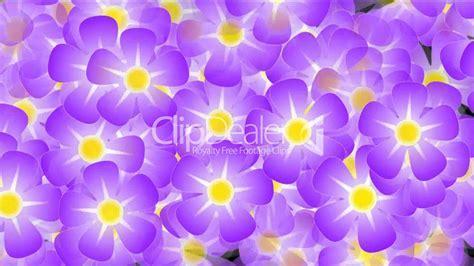 purple wild flower background,violet,flicker,Festivals