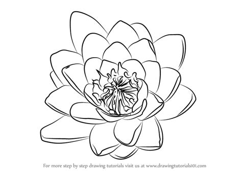 how to draw a water line on a model boat learn how to draw water lily flower lily step by step
