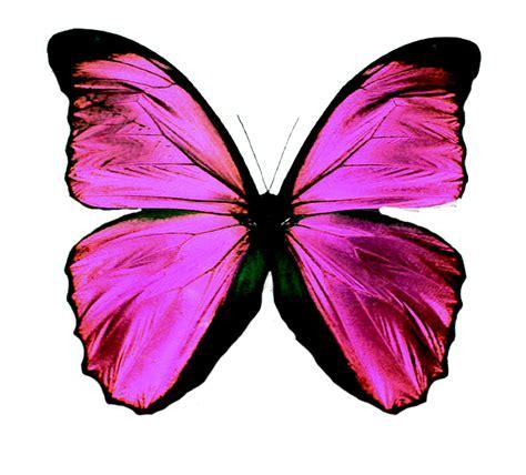 imagenes png mariposas amo a shane gray mariposa png
