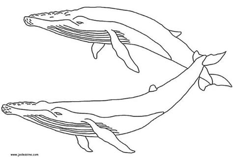 coloring page humpback whale whale coloring pages animal coloring pages whales gianfreda net