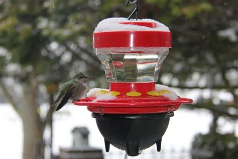 hummers heated delight photo gallery