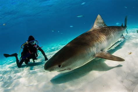 diving tours fiji holiday diving