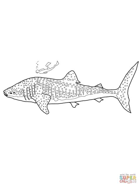 coloring page of whale shark whale shark coloring page free printable coloring pages