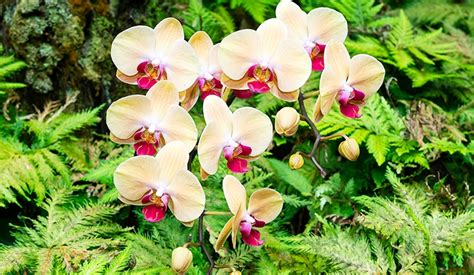 taking care of orchids and seeing them up close in hawaii